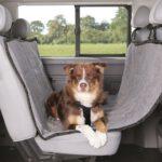 Hondendekens: een zegen voor zowel hond als auto